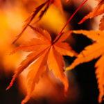 夜の闇にライトアップされた紅葉の葉