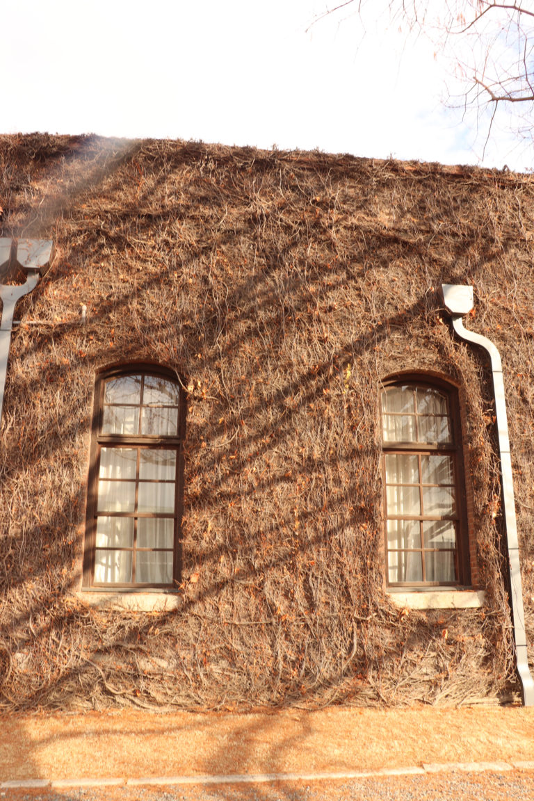倉敷美観地区 アイビースクエア 冬の日差しと窓