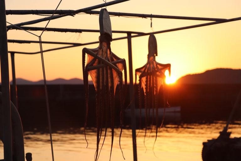 冬の風物詩 倉敷下津井の干しダコと夕日