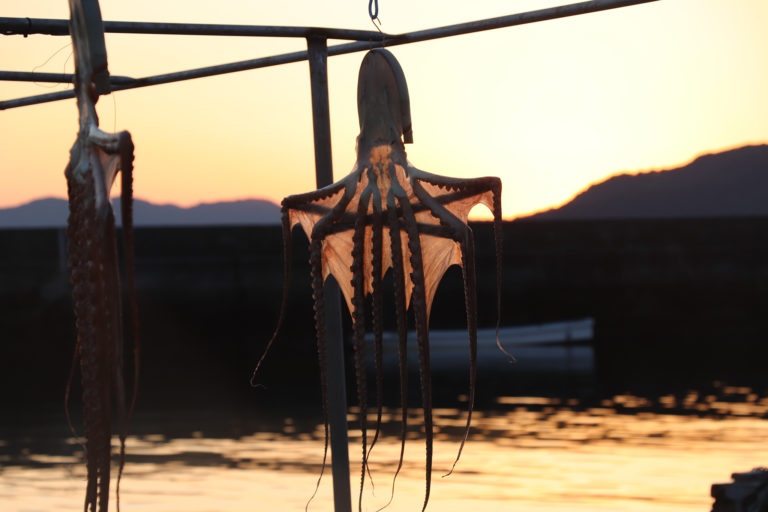 倉敷下津井の船の上で揺れる干しダコ