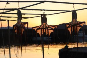 夕暮れの漁港の干しだこ