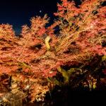 清水寺 紅葉のライトアップ