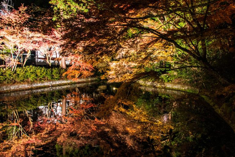 清水寺の池に映る紅葉