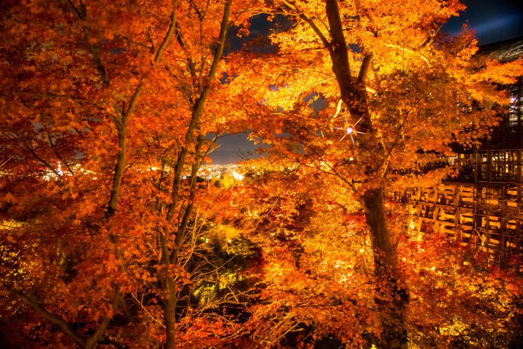 清水寺の紅葉の間から見る景色