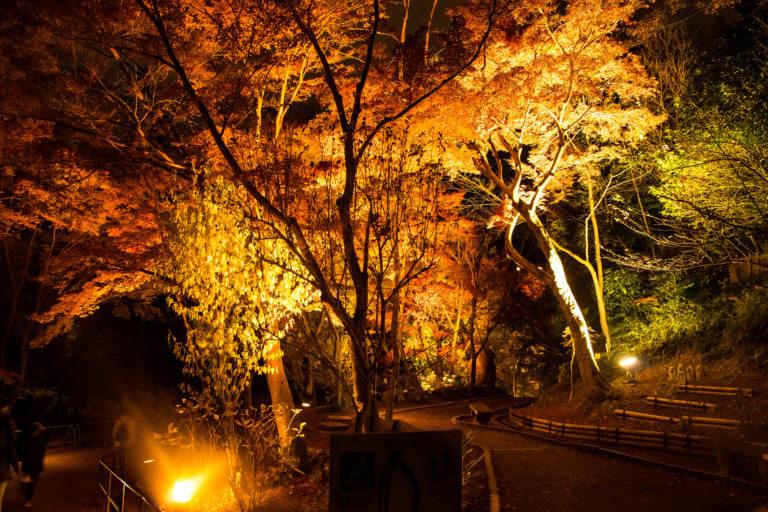 京都清水寺の庭園のライトアップ