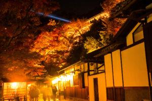 京都清水寺紅葉ライトアップ