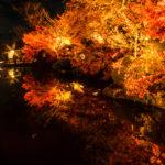水面に幻想的に映し出された紅葉