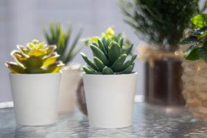 多肉植物のミニ観葉植物
