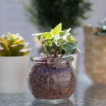 ガラスの鉢に入ったミニ観葉植物