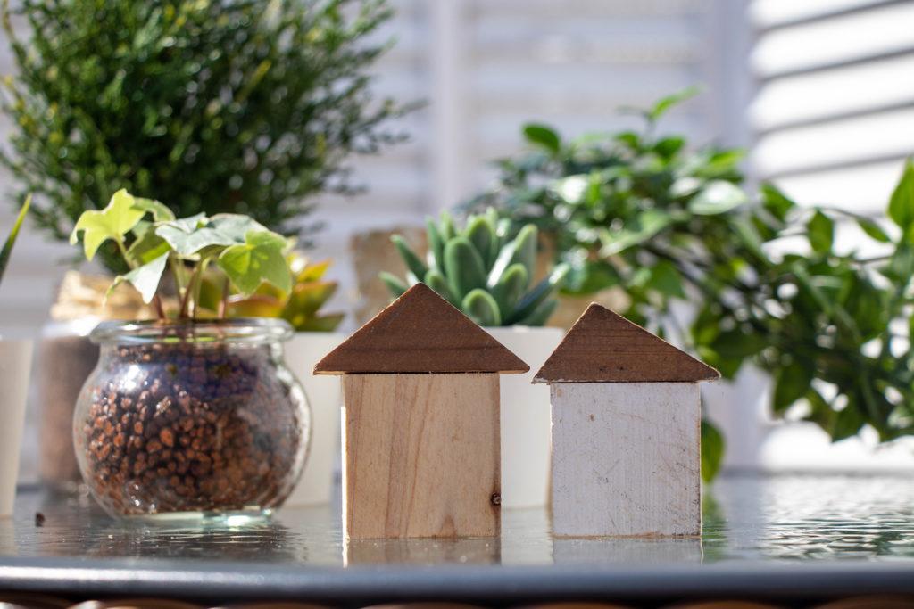 家と観葉植物