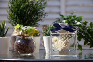 観葉植物とディフューザー