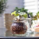 ベランダで陽にあたる小さな観葉植物