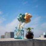 青空とお花と観葉植物