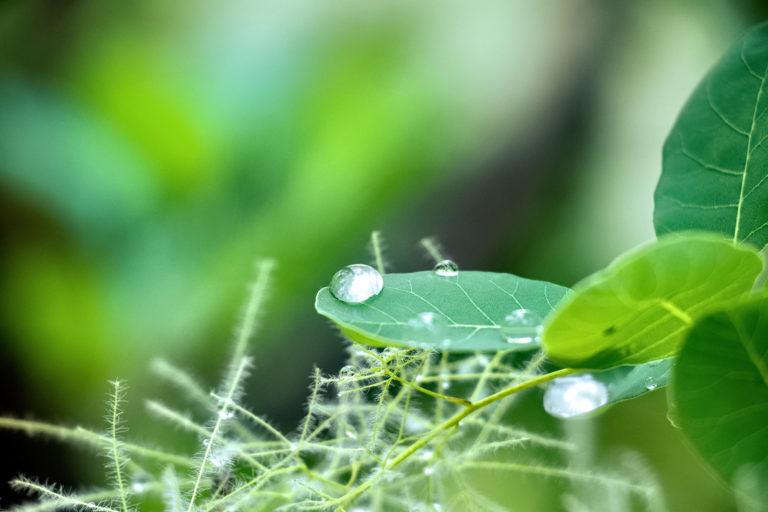 葉っぱに雨の雫