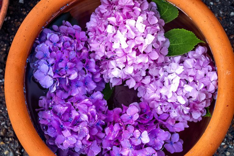 水に浮かぶ紫とピンクの紫陽花
